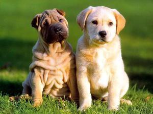 длительность жизни собак