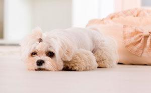 стерилизация собак особенности