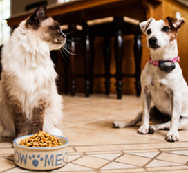 польза кошачьей еды для собак