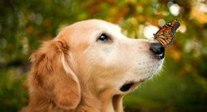 назначение стерилизации собак