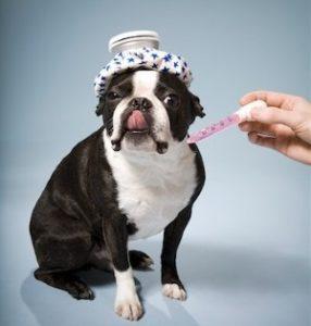 температура в зависимости от породы собаки