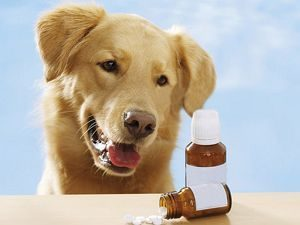 собака смотрит на витамины