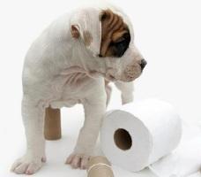 запор у собаки причины